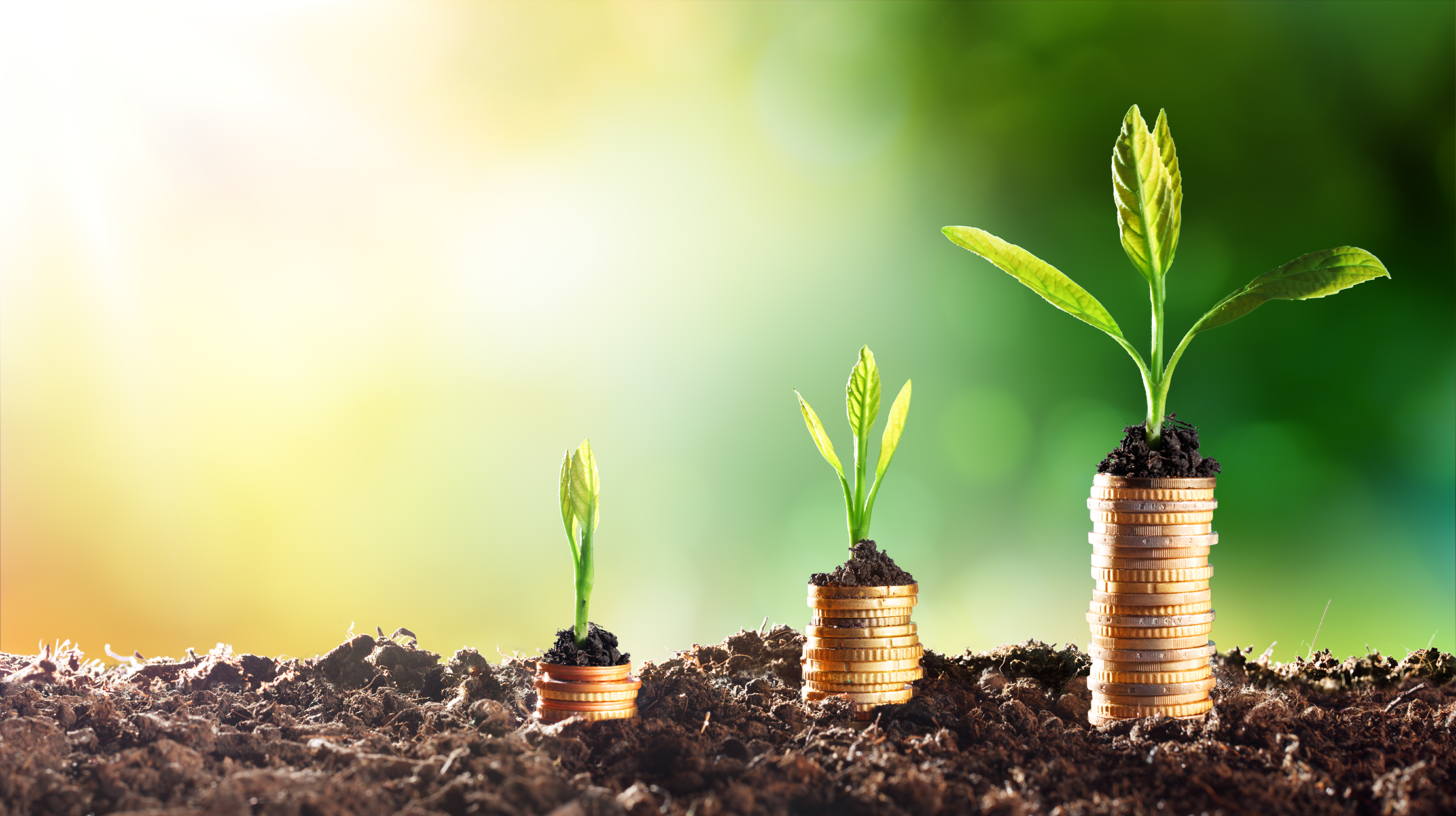 Transition finance: banking brown towards a greener future