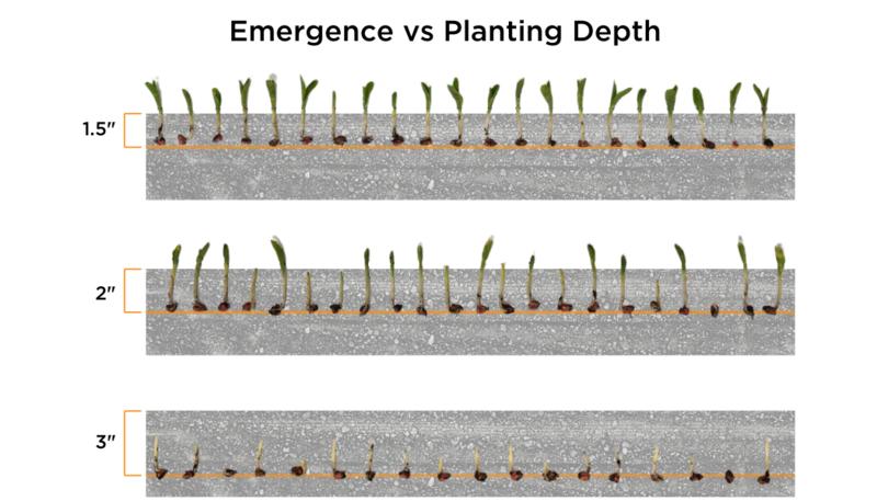 emergence vs planting depth