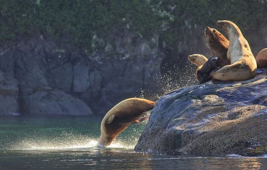 See noisy colonies of sea lions.