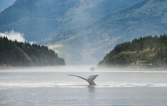 Keep your eyes open for humpback whales.