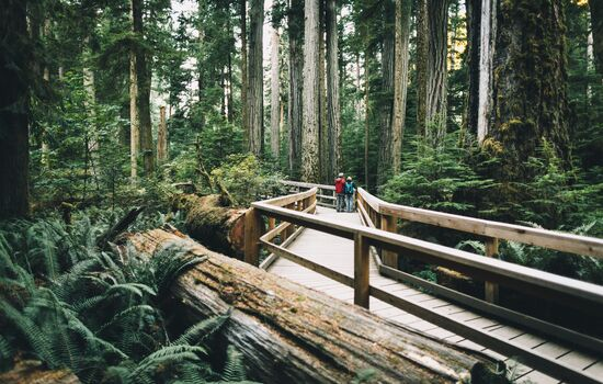 Discover massive trees in Cathedral Grove - some over 800 years old.