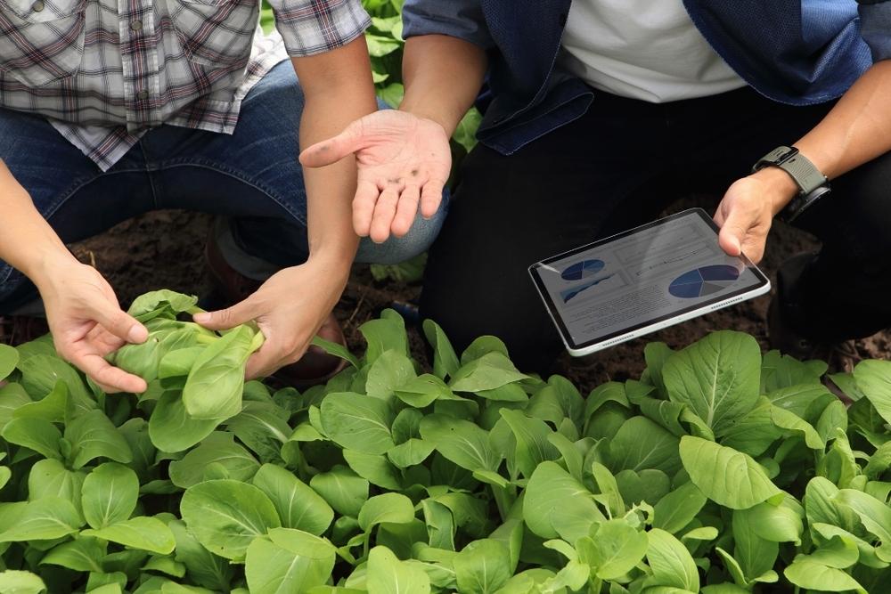 plant - sustainability