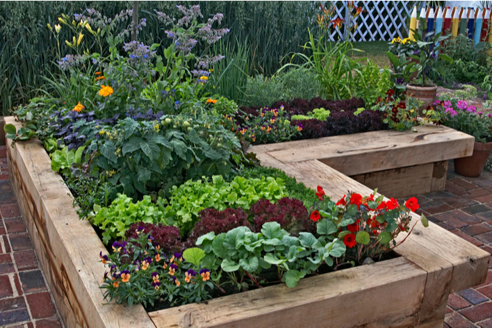 An edible garden in an outdoor living space