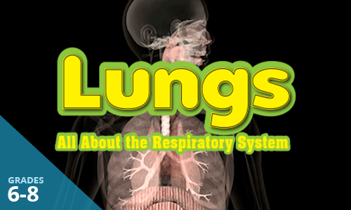 View the Lightbox Demo for Lungs