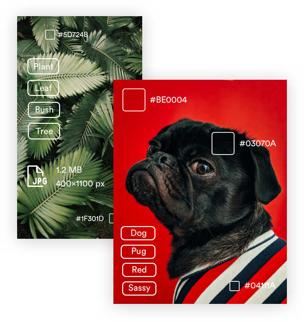 auto-tagging example on a pug
