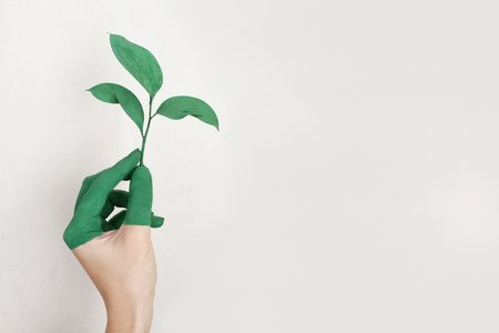 person with green fingers holding a sprout