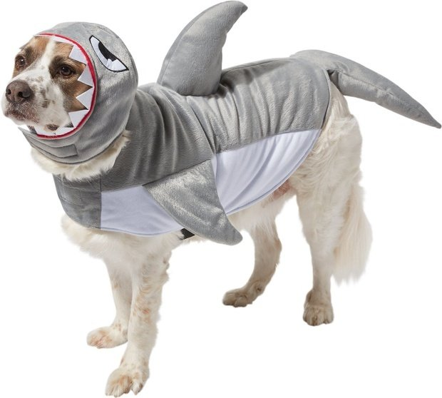 shark dog and cat costume