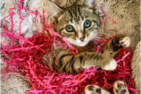 The cat adopted by Juliette is in the bed with some confetti.