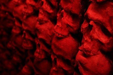 skulls, her campus western