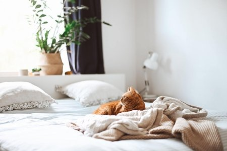 cat lying in bed Bed