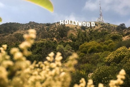hollywood sign with foliage