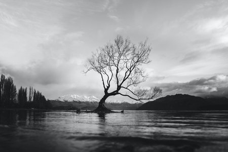 greyscale image of a tree in water