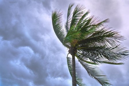Palm tree in front of stormy sky