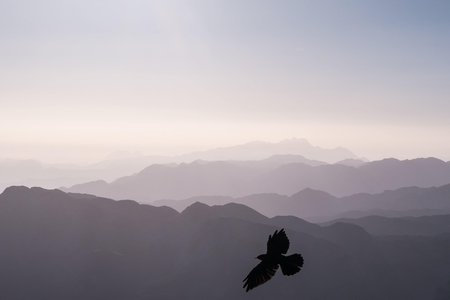 Bird silhouette in front of mountain range
