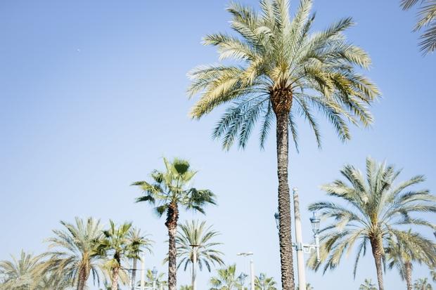 study abroad spain barcelona palm trees beach summer sunny tropical