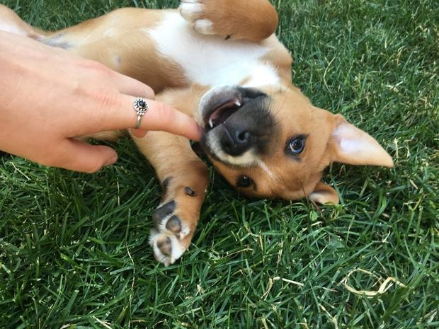 Puppy Hand Fun Ring Summer Hapy Original