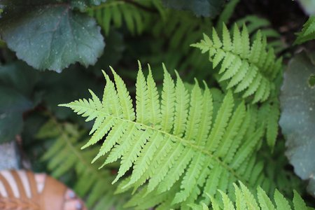 The Lalasandals And Ferns