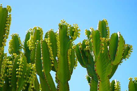 Cameron Smith-Cacti Blue Sky