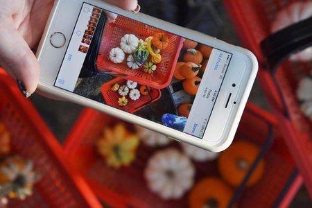 Iphone Taking Photo Of Pumpkins