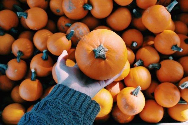 Small Pumpkin In Hand