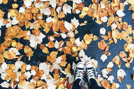 Leaves Converse Fall Sneakers Ground