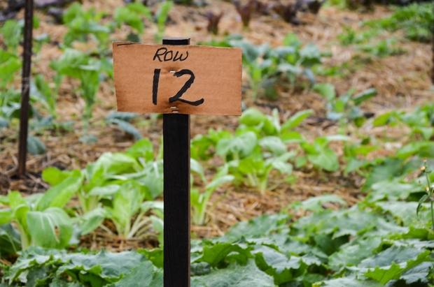 Farm Row 12 Produce