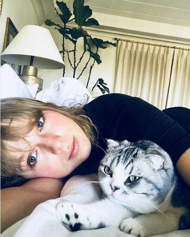 Taylor Swift Cats
