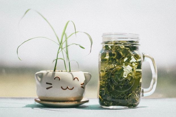 Glass bottle and potted plant