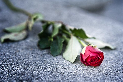 a single red rose lying on a black tabletop