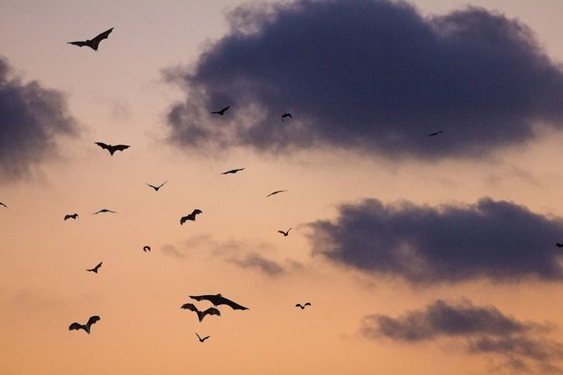 bats flying against a sunset