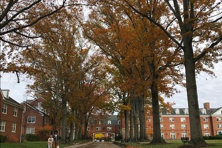 Ohio University Leaves Fall East Green