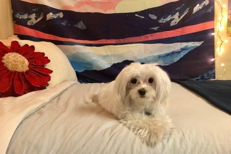 small dog on bed 1