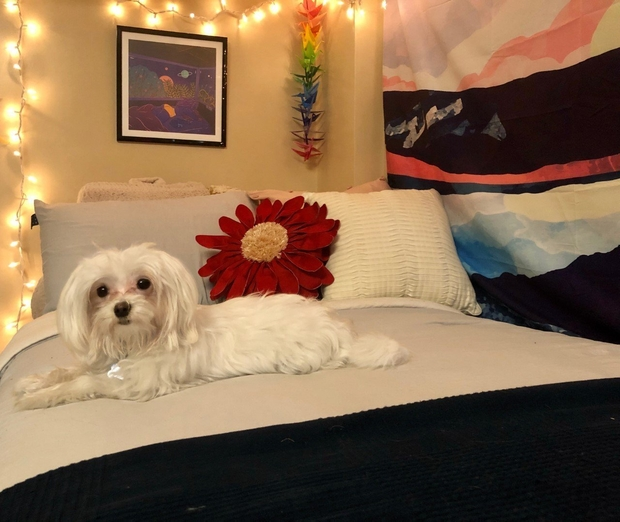 small dog on bed 2