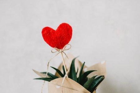 heart in a little plant