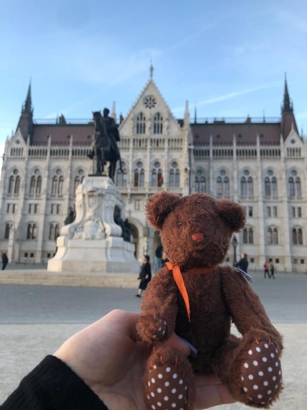 teddy bear Budapest