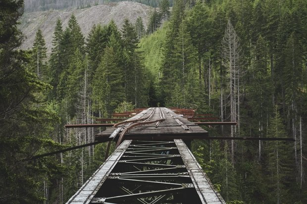 bridge surrounded by trees