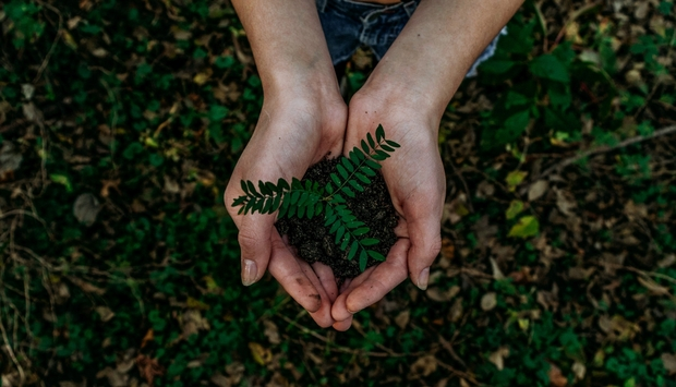 Hands holding dirt and plant