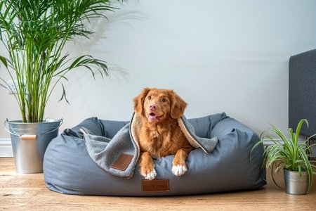 smiling puppy in dog bed by jamie street