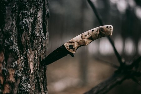 knife stuck in a tree