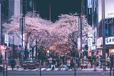 cherry blossoms and city lights at night