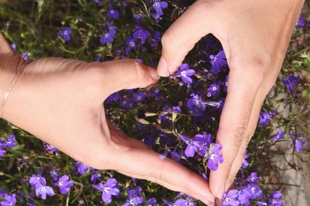 hands making a heart shape over purple flowers shot from above