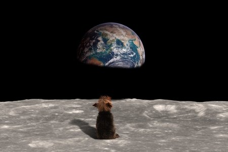 Dog looking at Earth from Moon