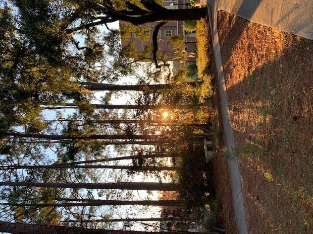 Sunset at FSU