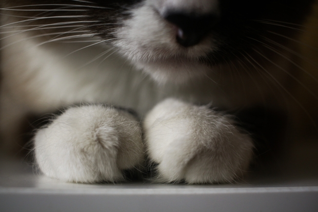 cat toes