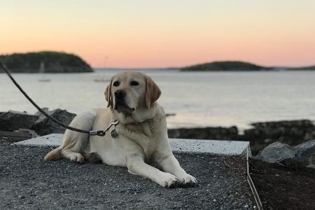 Riley laying in front of the sunset