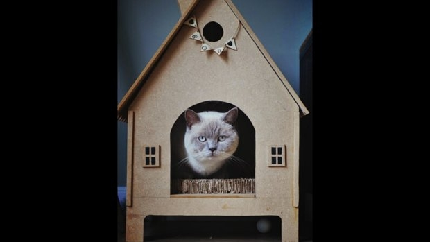 cat looking into the camera while sitting in a DIY house