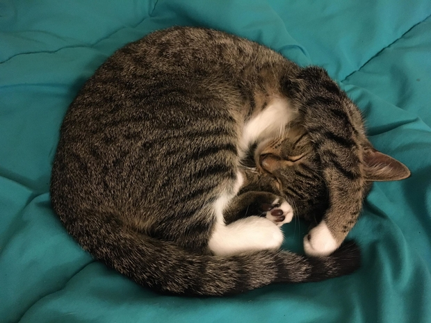 a cat curled up into a ball sleeping