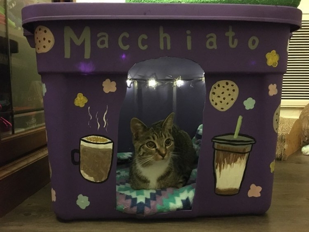 Macchiato sits in her new pet house