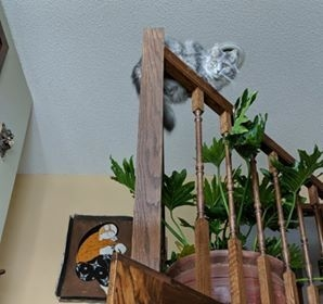 tabby cat sitting on stairs railing