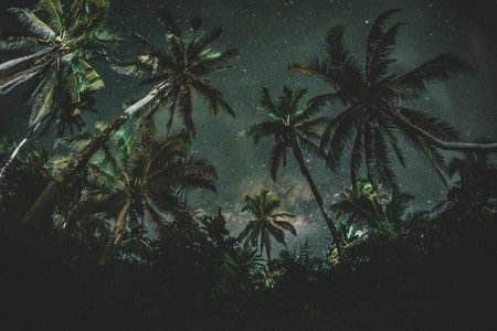 Stars behind palm trees